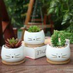 Petit Pots De Fleurs Chat Blanc